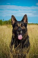 Dogs Who Have Found A Home Dog Rehoming Northumbria Police